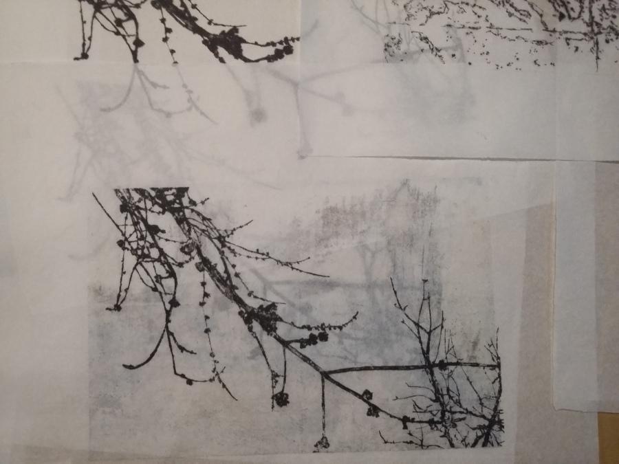 Image-trace (AL H Blanc)